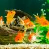 Temperatura del acuario demasiado alta: 10 consejos para enfriar un acuario