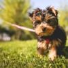 VERANO CALUROSO: ¿Cuándo está demasiado caliente el asfalto para tu perro?